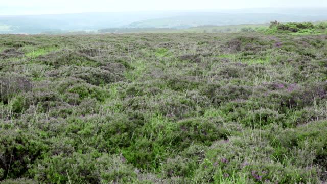 Moorland Northumberland National Park video