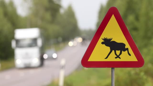 älgvarningsskylt på motorväg - älg sverige bildbanksvideor och videomaterial från bakom kulisserna