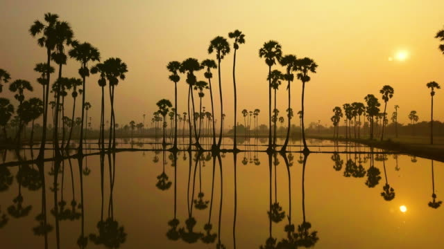morning at sunrise light with sugar palm trees, thailand. - palm of hand stock videos & royalty-free footage