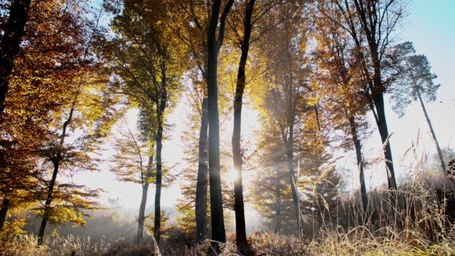 SLO MO autunno rugiada del mattino nella foresta - video