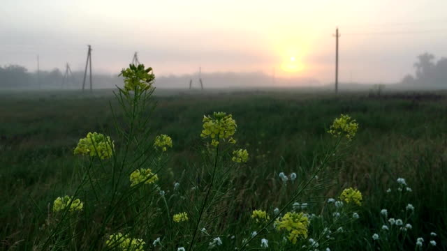 morning field fog electric poles Russia village province - vídeo