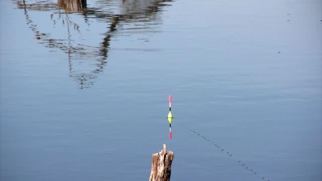 morning fishing - meta bildbanksvideor och videomaterial från bakom kulisserna