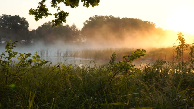 Morning fog on a quiet lake in the rays of rising sun video