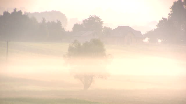 Morning fog over landscape with tree video