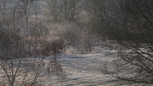 Morning hoarfrost in Falkensee near Berlin Spandau on March 8, 2020, Germany