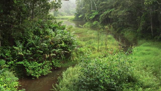 morgon i madagaskar afrikansk djungel tät grön skog med långsam flod flyter - madagaskar bildbanksvideor och videomaterial från bakom kulisserna
