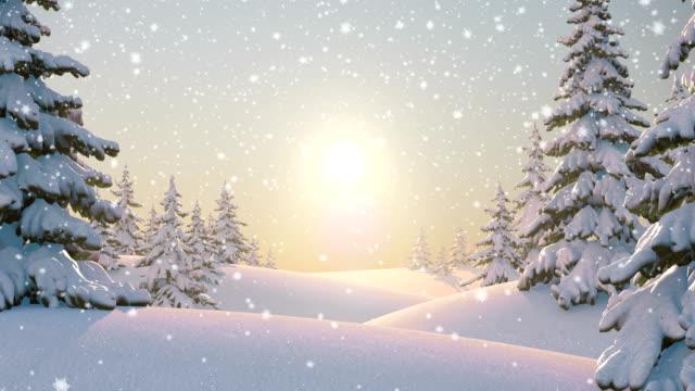 poranek w lesie, beautifull zimowe tło - jodła filmów i materiałów b-roll