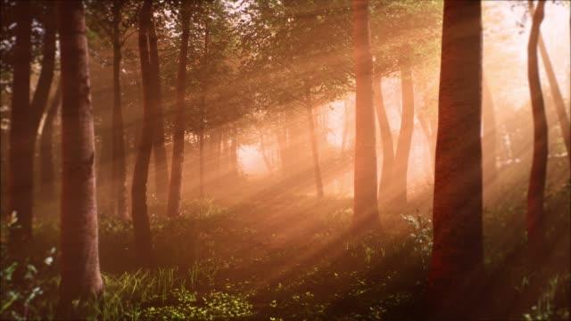 ormanda sabah - sessizlik stok videoları ve detay görüntü çekimi