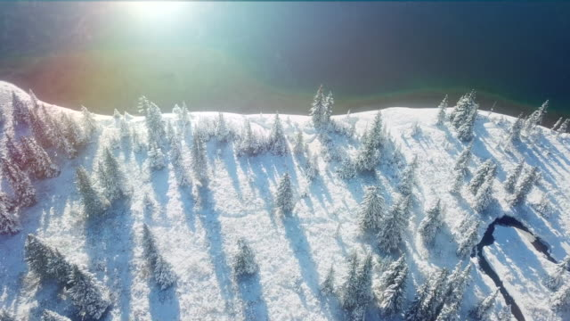 vídeos y material grabado en eventos de stock de lago de la mañana después de la nevada - pino conífera