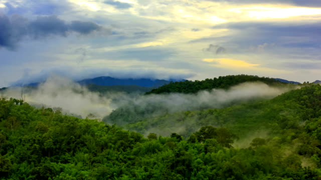 morning mist at tropical rain forest - trees in mist stock videos & royalty-free footage