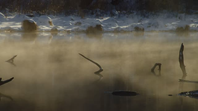風に流れる朝の霧 ビデオ