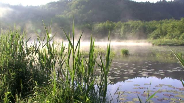 Morning Pond Fog over the Ljubljana Marshes marsh stock videos & royalty-free footage