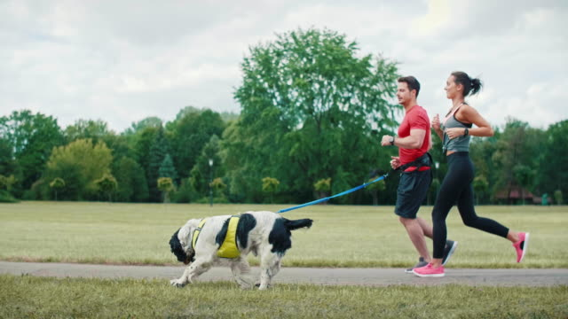 vídeos de stock, filmes e b-roll de manhã que funciona com cão e sócio - fazendo cooper