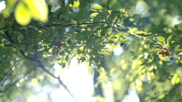 Morning sun comes up through leaves at sunrise Close up slowmotion shoot of Morning sun comes up through leaves at sunrise summer background stock videos & royalty-free footage