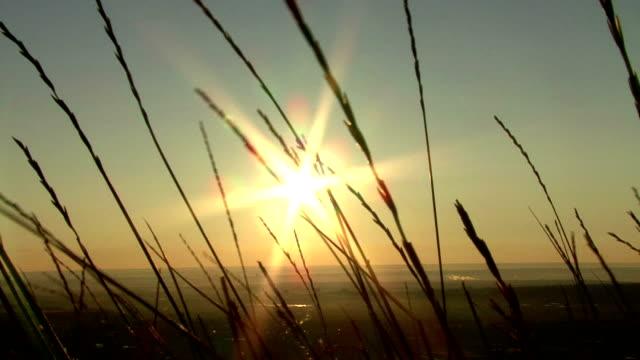 morning sun video