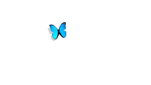 Morpho Menelaus Blue Butterfly Flying on a Green Background