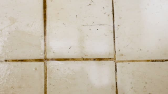 Mosquito larvae on ceramic tile Mosquito larvae on ceramic tile in bathroom larva stock videos & royalty-free footage