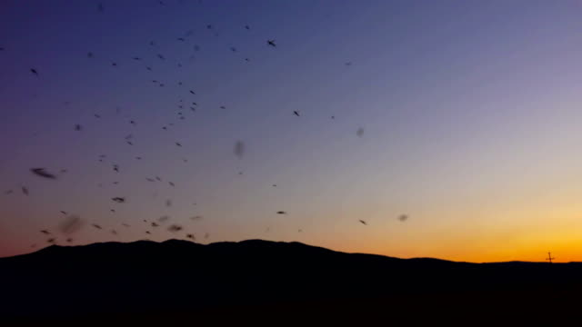 Mosquitoes silhouette on sunset horizon. Real footage Sony shoot video