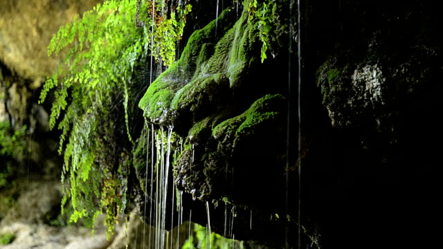 Moss and ferns with dripping water video