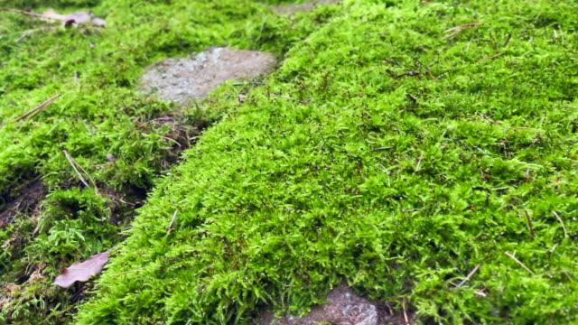 moss och rocks närbild. idylliska omgivningar i skogen - torv bildbanksvideor och videomaterial från bakom kulisserna