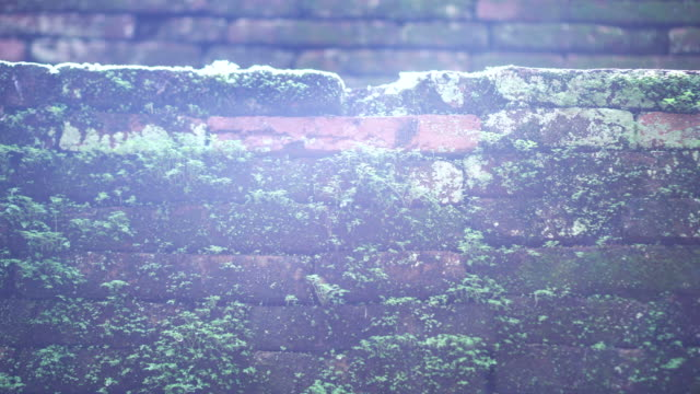 Moss cover brick wall with sun flare glitch video 4K