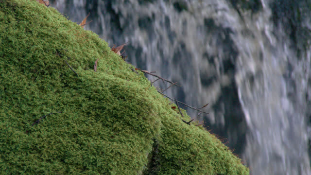 Moss covered rock in front of a waterfall in Scottish woodland during autumn 4K footage shot at 50fps and interpreted at 25fps to give slow motion galloway scotland stock videos & royalty-free footage