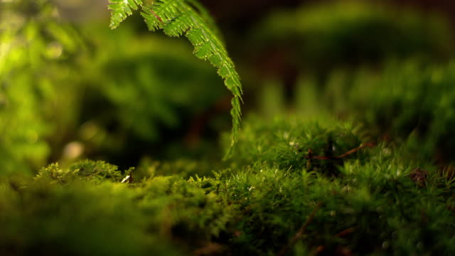 Moss in forest Moss in forest moss stock videos & royalty-free footage