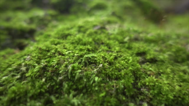 vídeos de stock e filmes b-roll de moss in wide dolly shot super slow motion - macro