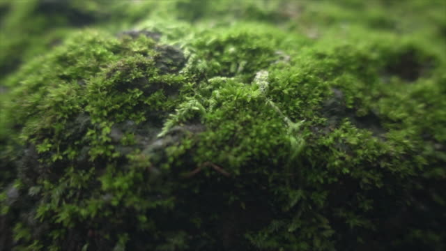 moss in wide dolly shot super slow motion - muschio flora video stock e b–roll