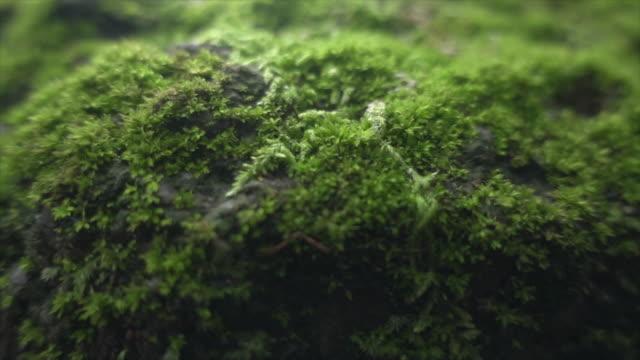 yosun geniş dolly çekim süper ağır çekim - kayaç stok videoları ve detay görüntü çekimi