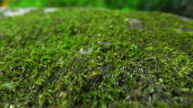 Moss In Wild Dolly Shot Super Slow Motion