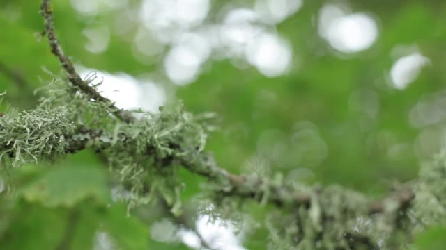 Moss on a green tree in the garden