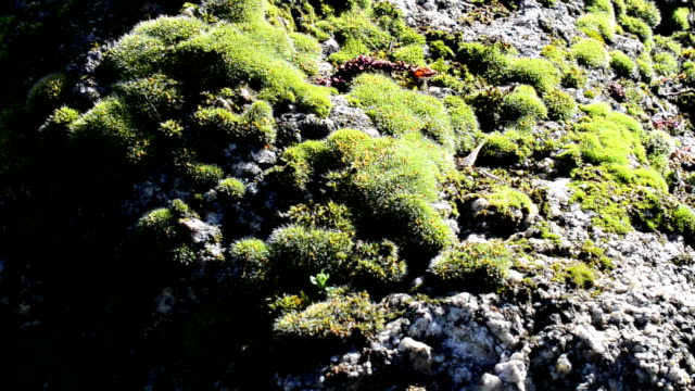 Moss on a stone video