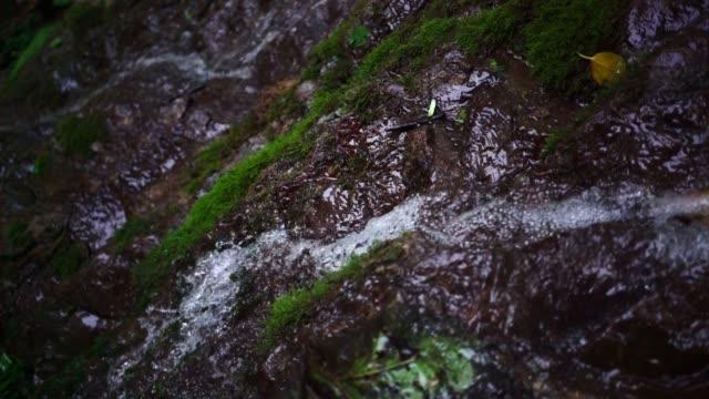 水滴で苔。暗い森の滝 - 湧水点の映像素材/bロール