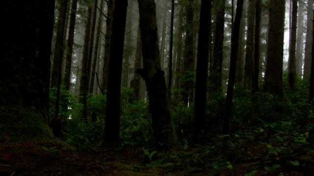 linea di mossy alberi di una foresta scuro e inquietanti. - yeti video stock e b–roll