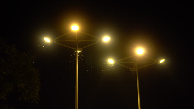 Moth Flying Around Streetlamps at Night video