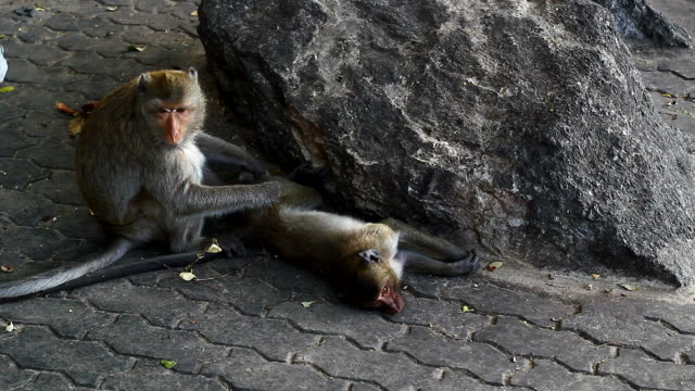 mother and baby monkey video