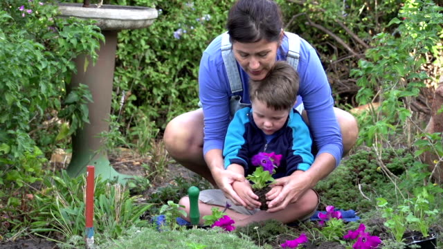 Mother and child planting flower seedlings in the garden, South Africa video