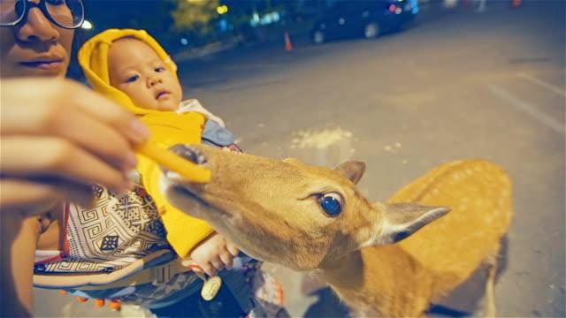 Madre e hija alimentación un ciervo en la noche - vídeo