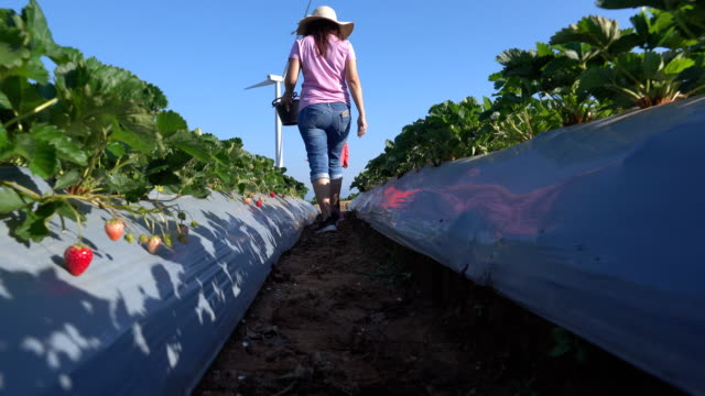 mother and daughter picking strawberries in the farm - energia sostenibile video stock e b–roll