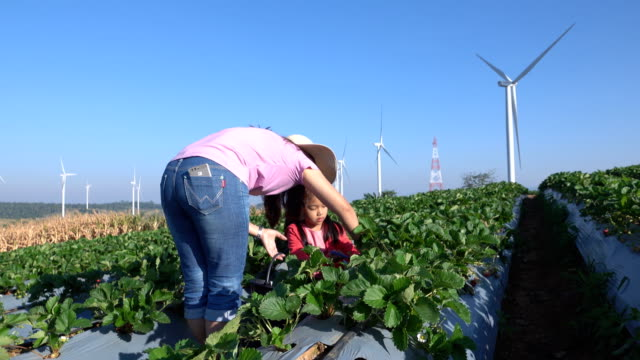Mother and Daughter Picking Strawberries in the farm