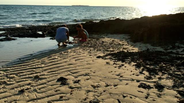 vidéos et rushes de mère et fille à la recherche de coquillages sur la plage - coquille et coquillage