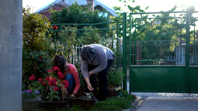 Mother And Daughter Working In The Garden Mother And Daughter Working In The Garden, taking care of flowers. ornamental garden stock videos & royalty-free footage