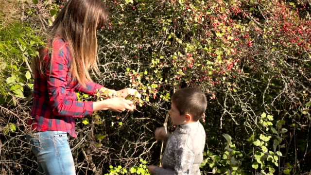 Mother and son collecting wild berries video