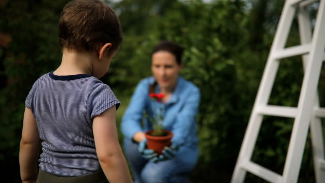 Mother and son planting flowers video