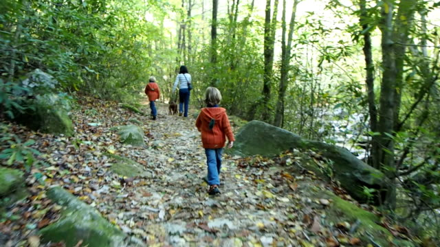 Mother and Two Boys Hiking In The Woods video