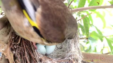 anne kuş besleme bebekler arka plan - memeli stok videoları ve detay görüntü çekimi