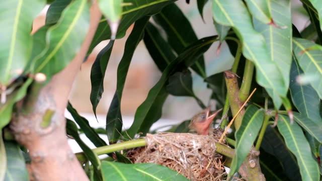 Mother bird Feeding food to new born video