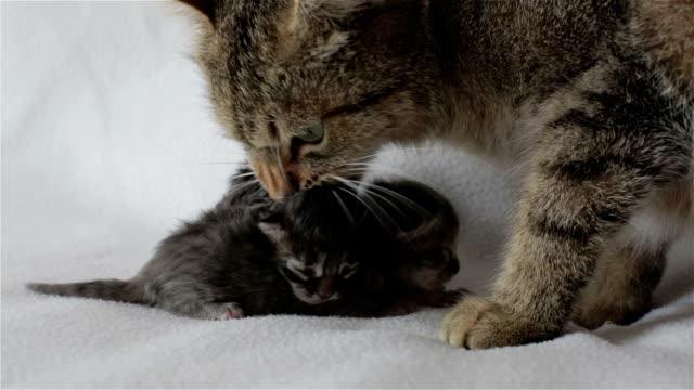 mamma katt och två blinda kattungar. - djurfamilj bildbanksvideor och videomaterial från bakom kulisserna