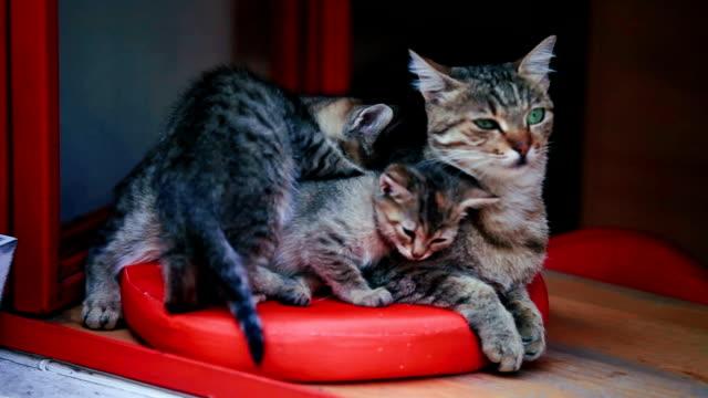 mamma katt med spädbarn - djurfamilj bildbanksvideor och videomaterial från bakom kulisserna